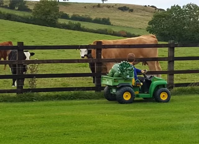 taking the dinosaur for a ride in front of the cows