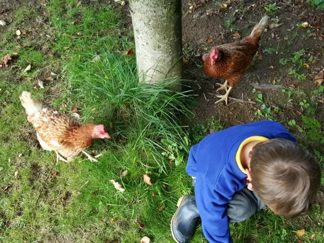 chickens and collecting conkers