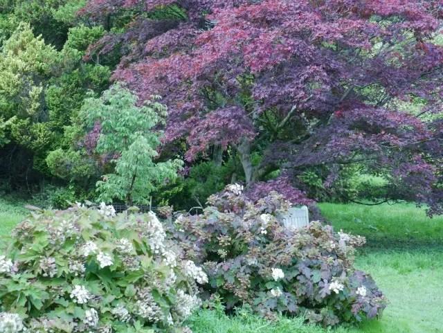 colourful trees at Batsford