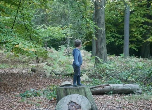 standing on tree trunks