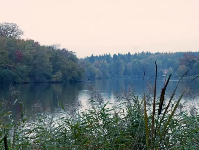 view over the lake at Virginia Water