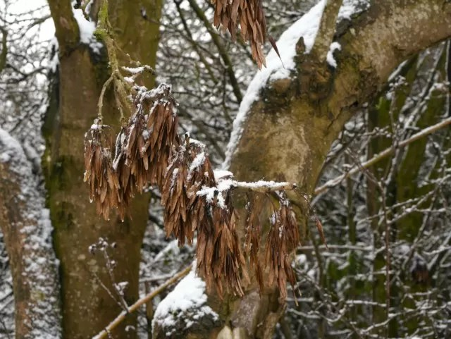hanging seeds in the snow