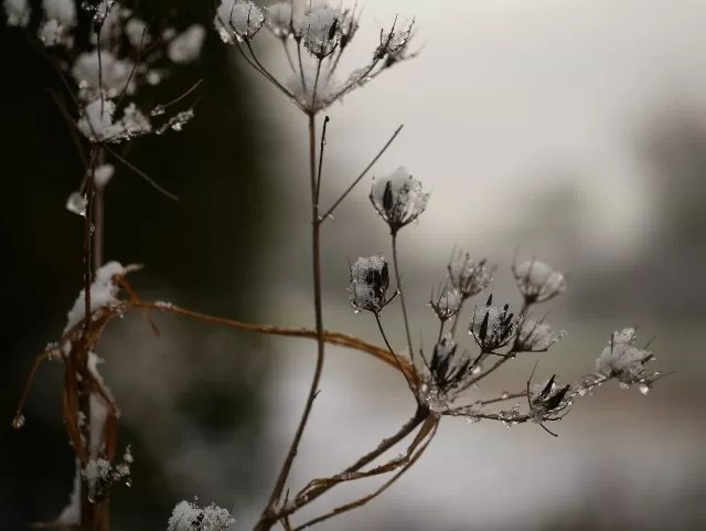 snowy plants along the road
