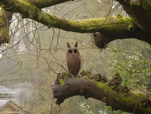 owl at Waddesdon Manor woods