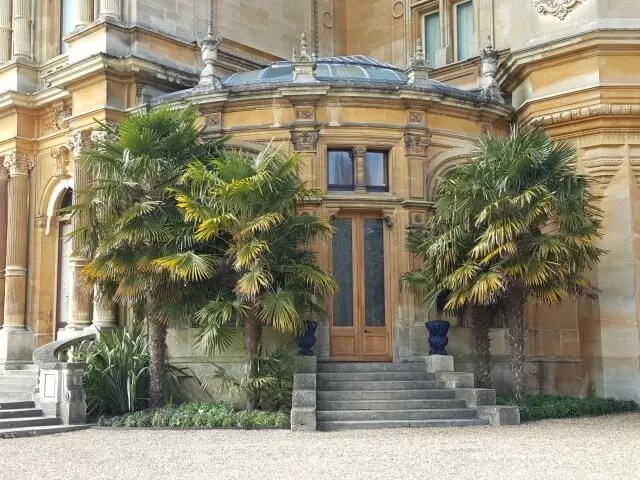 palm trees at Waddesdon manor