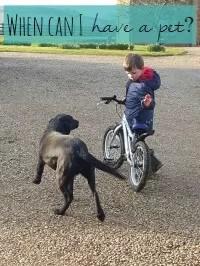 have a pet