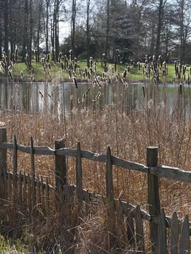 reeds at stowe gardens