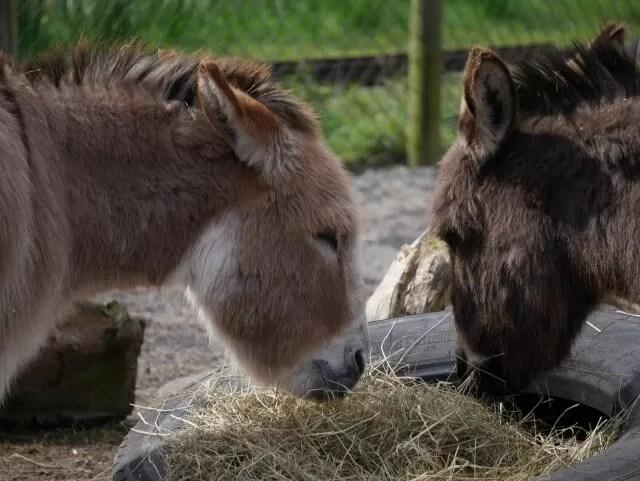 donkeys at Twycross Zoo