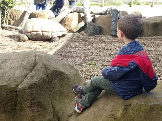 giant tortoise at Twycross Zoo