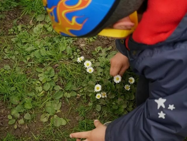 picking daisies in Spiceball