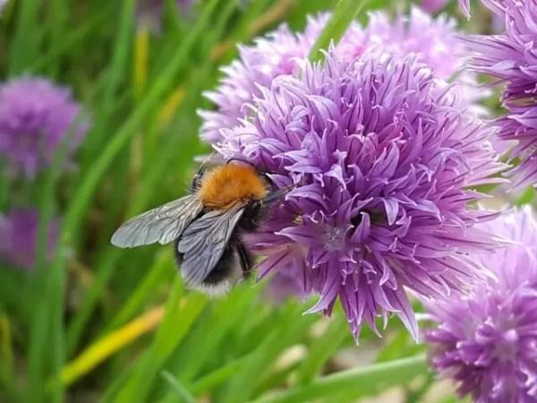 bee on cloves