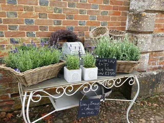 lavender on sale