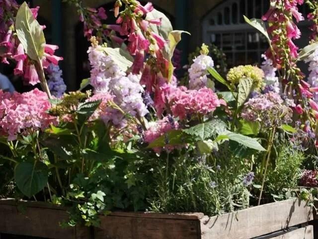 Covent Garden flowers