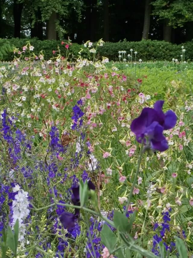 wildflower garden at hidcote gardens