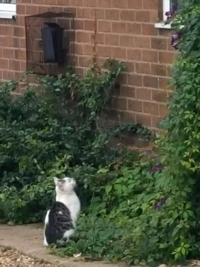 cat watching the birds