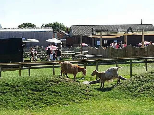 goats-fighting