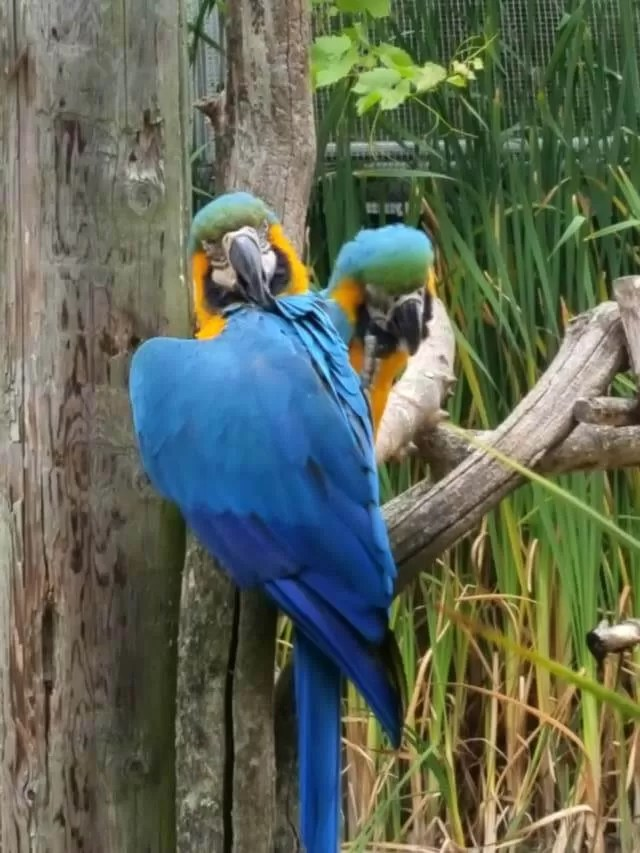 parrots-at-cotswold-wildpark