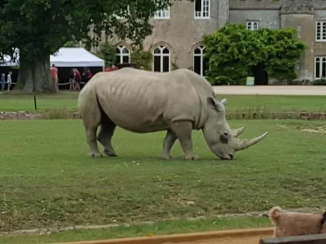 rhinos-at-cotswold-wildlife-park