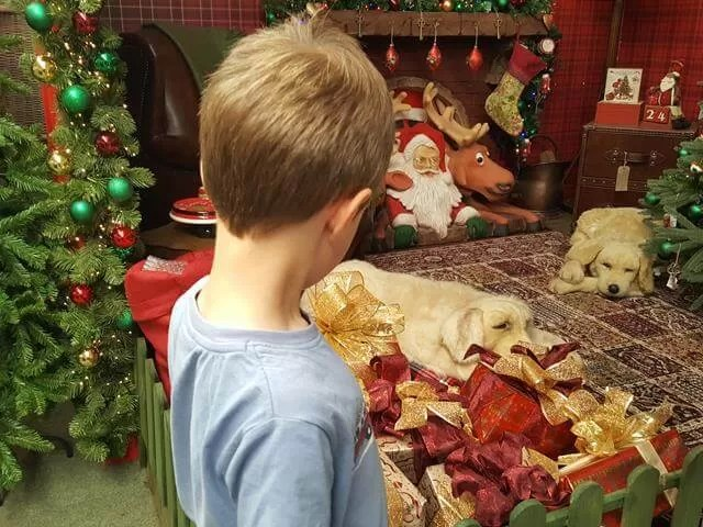 dog christmas display at millets farm centre