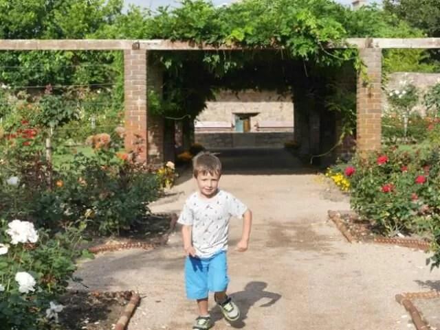 flower-tunnel-in-the-rose-garden