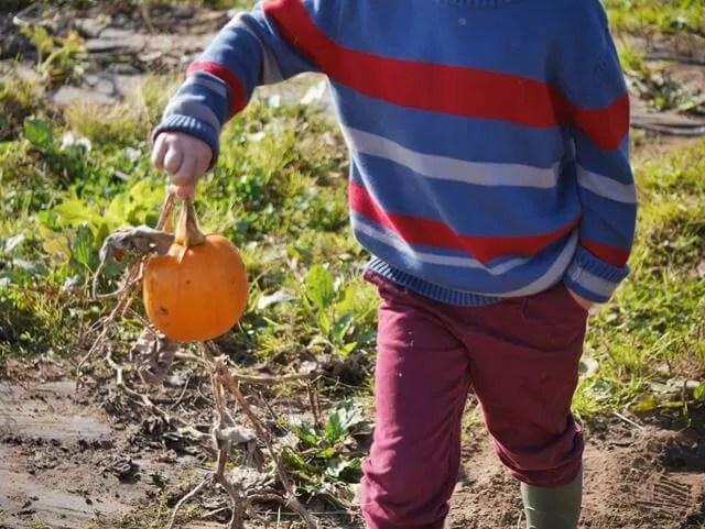 one little pumpkin chosen