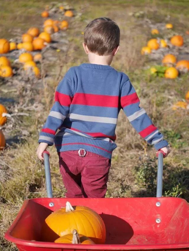 wheeling his pumpkins