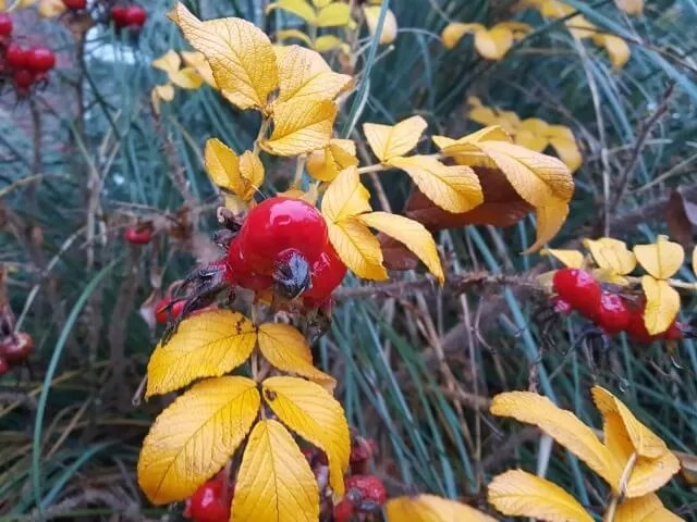 colours of autumn bushes