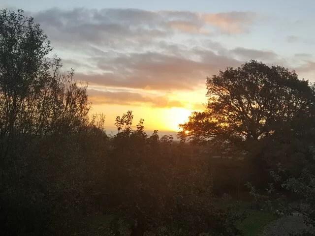 sunrise over the trees on the farm
