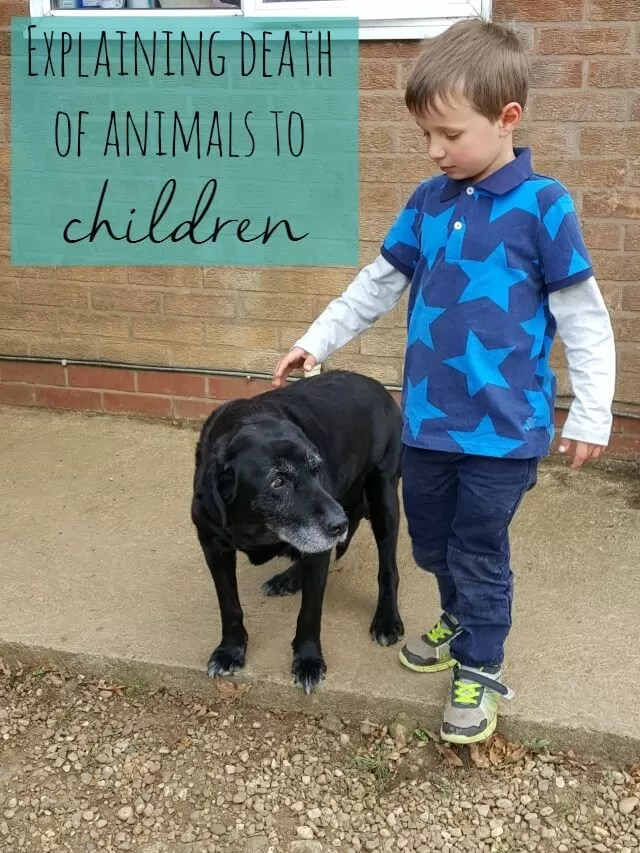 explaining-death-of-animals-to-children-bubbablue-and-me