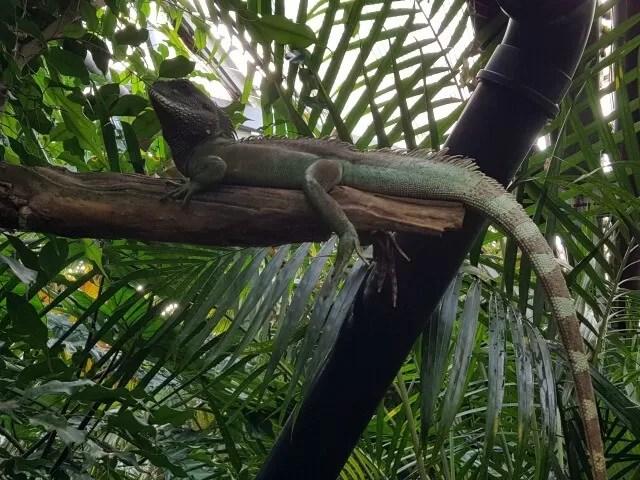 lizard-on-a-tree