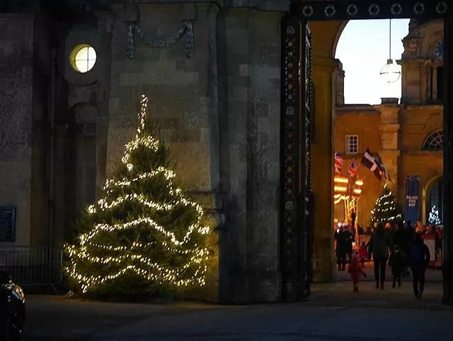 christmas trees at the entrance to blenheim