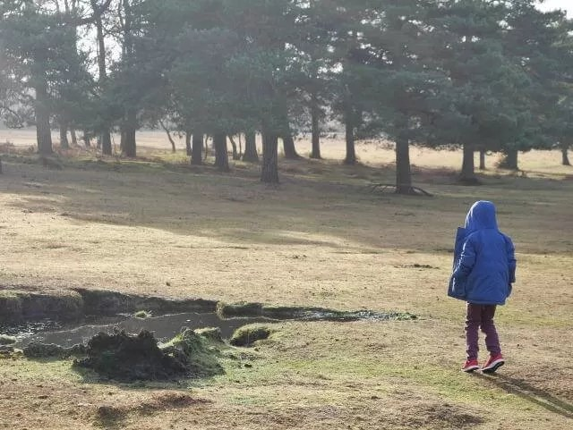 Ambling in the New Forest