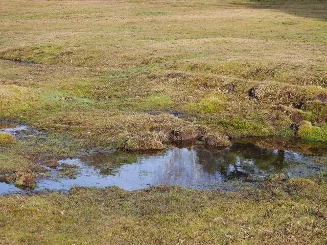 reflection in new forest water puddles