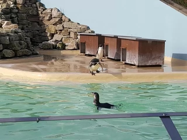 penguins swimming at paultons park