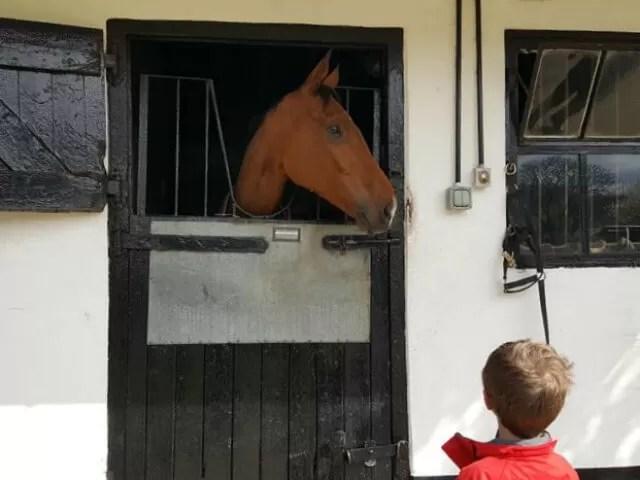 meeting horses in Lambourn