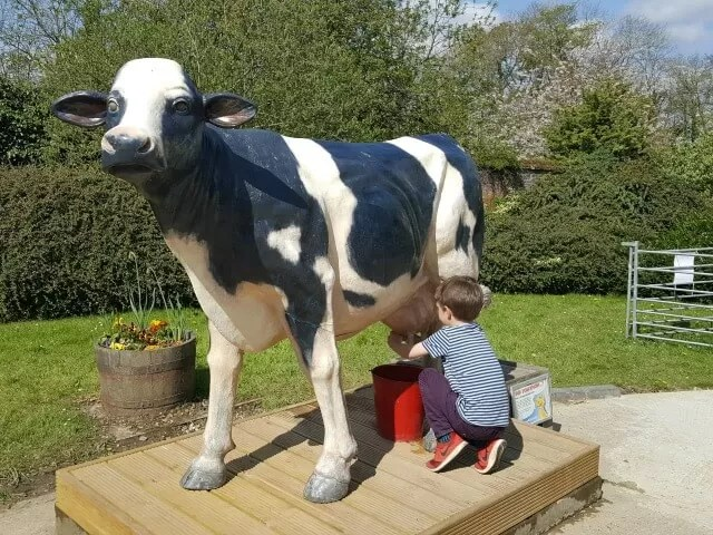 milking the cow at Dinosaur Adventure