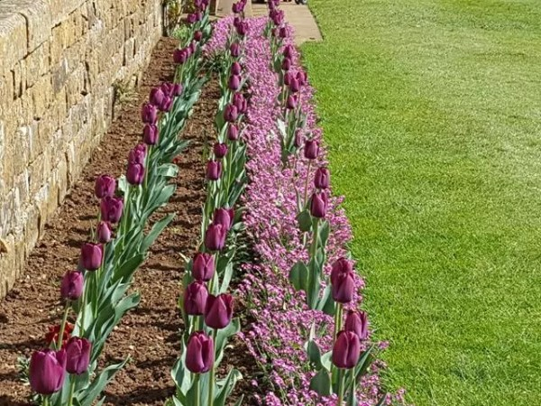 My Sunday Photo - purple flower beds at Upton House