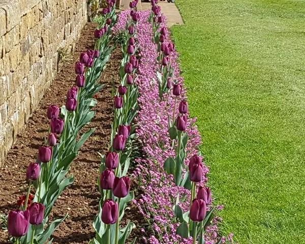 My Sunday Photo – purple flowers