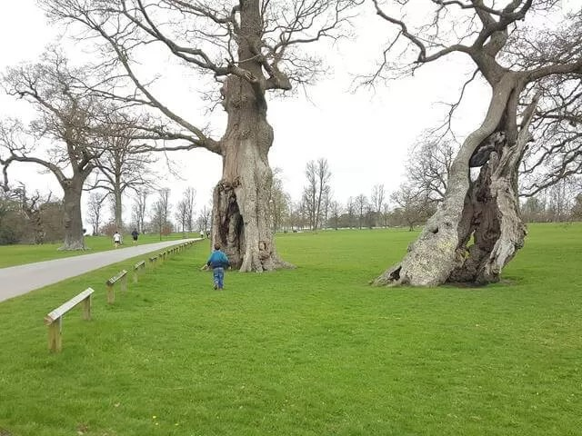 hollow trees at blenheim