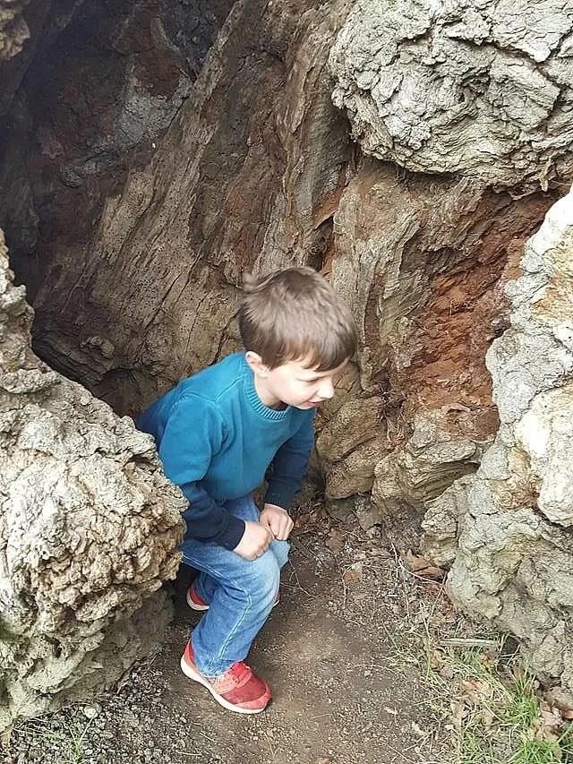 inside a hollow tree at blenheim