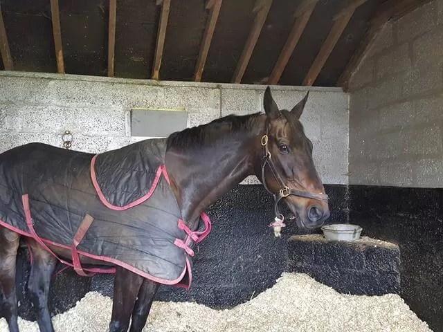 sprinter sacre stabled