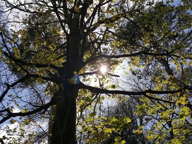 sun through the trees at Upron