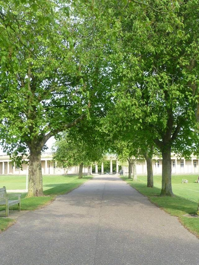 tree avenue at Eaton Park