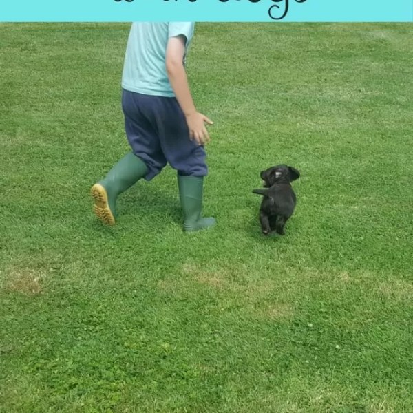 Making friends and growing up with puppies