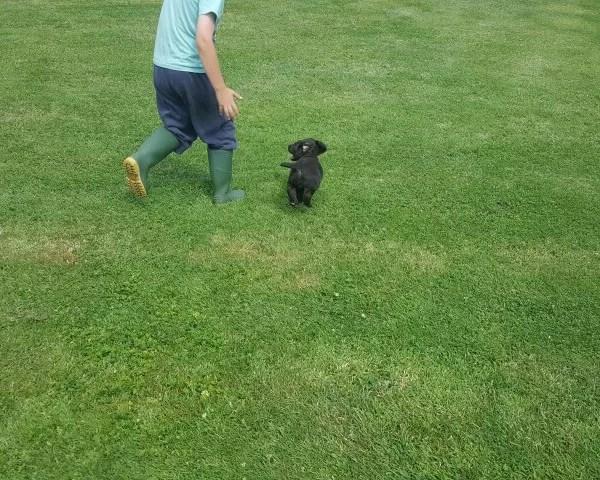 My Sunday Photo – puppy on the run