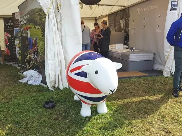 british sheep at countryfile live