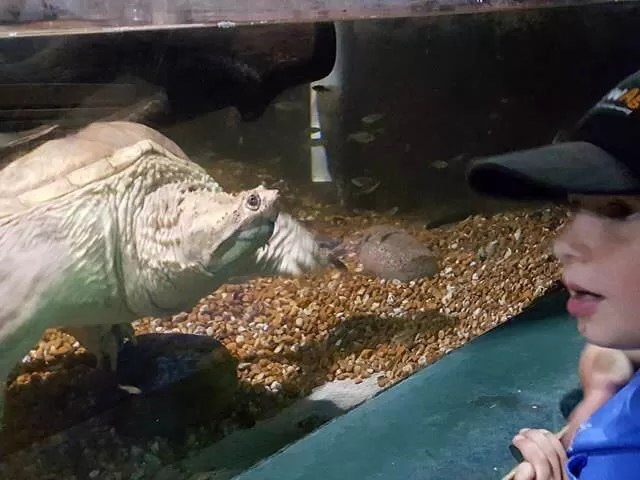 meeting a turtle