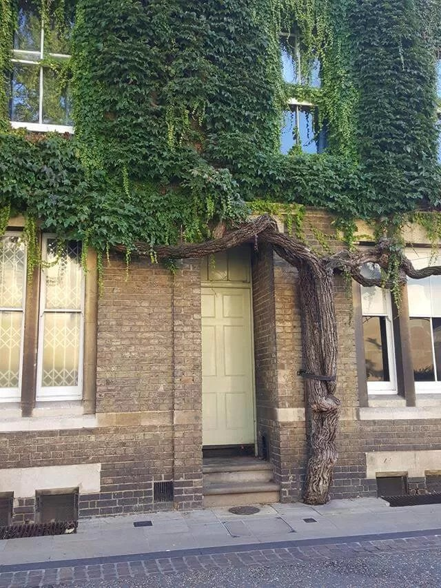tree surrounded door new inn hall street