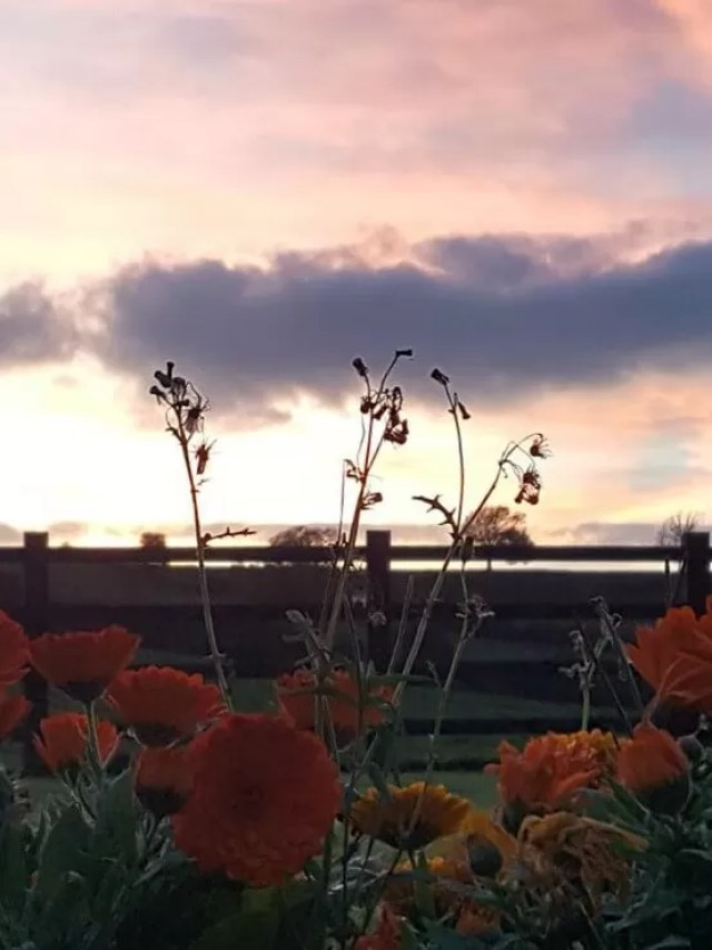flowers in front of sunset across the