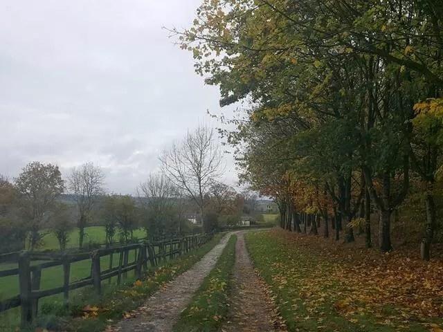 My Sunday Photo - autumn leaves on trees